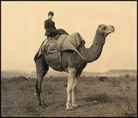Bridget Carmody on camel (1892)